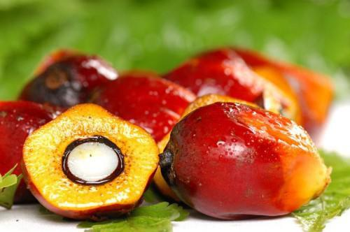 Central Africa has strategy of sustainable development of palm oil sector