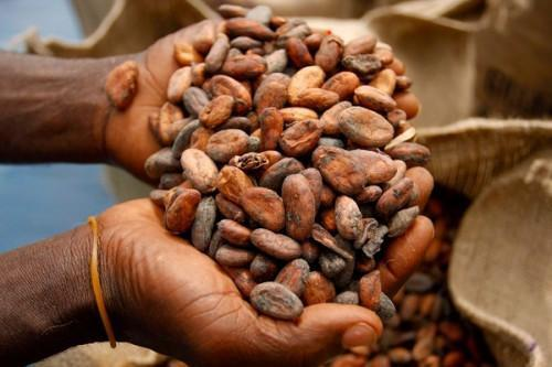 Cocoa farm gate prices drop in Cameroon, during wet season