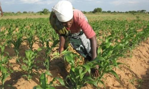 Financing for the agricultural sector represented 14.9% of bank loans in Cameroon in 2015