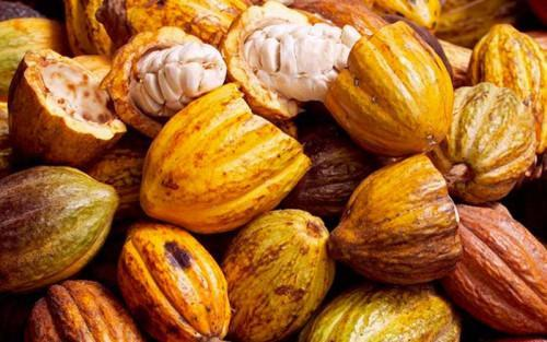 Cameroon: Cocoa production rose during the 2017-2018 campaign despite unrest in the Southwest