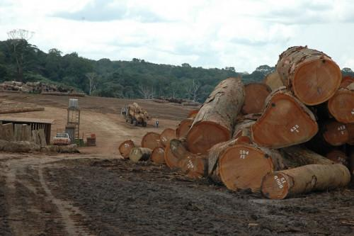 Cameroon's wood exports to Britain shrunk by 17% year-on-year, between January and September 2018