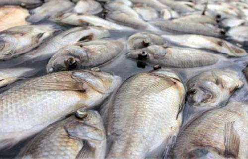 Over 6,400 tons of illegaly-harvested fishes seized at Lagdo dam