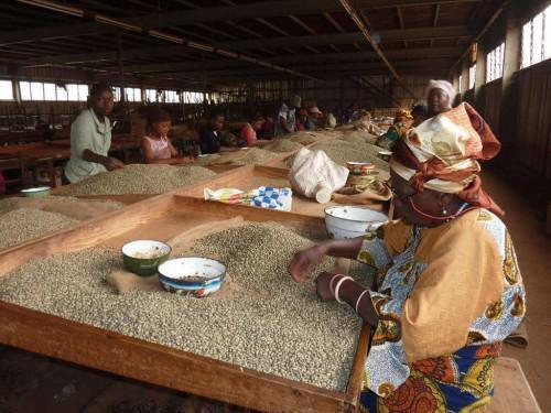 The Cameroonian coffee found its way on nine international markets during the 2016-2017 campaign