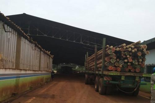 Cameroon : Due to security reasons, Eneo is unable to access forests in the Northwest to replace wooden poles