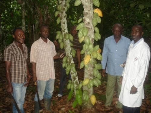 Ban on Cameroon Cocoa Exports Feared in Europe