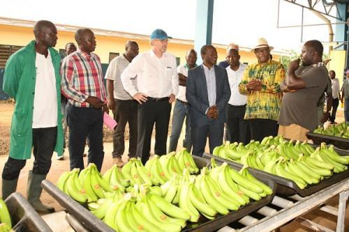 Cameroon: The EU agrees for a 2-year extension of its banana support measures BAM