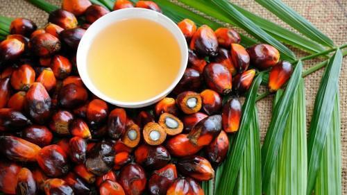 CDC's palm oil production dropped drastically in H1, 2019