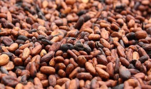 Cameroon's cocoa processing capacity to be boosted with the commissioning of Atlantic Cocoa's plants in Kribi