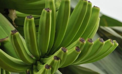 Cameroon sold 21,947t of banana in Feb 2019, up 2,745t y/y