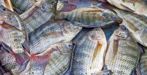 Cameroon: Fish import dropped by 31.8% to CFA114.3bn in 2017