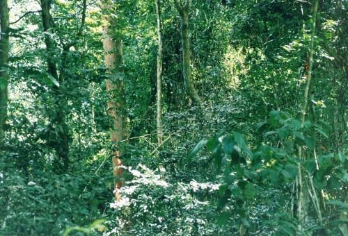 Congo Basin Examines Forest Management Monitoring Systems