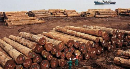 Cameroonian wood exports to EU slightly up in early 2019