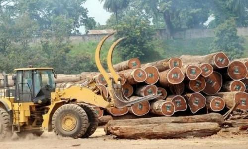 Cameroon: Local timber growers to take part in the Wood fair in Gabon on June 24-26, 2019
