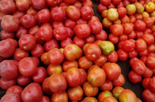 Cameroon plans a revival plan for the tomato sector affected by border closure