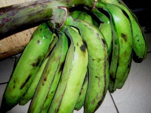 Cameroon to value the plantain sector with construction of an industrial plantain processing plant in Pouma