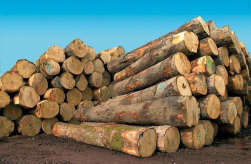 Cameroon's exports, of sawn wood, to the EU have decreased by 21% in the last eleven months