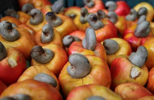 Cameroon sets a 2019-23 national strategy to develop cashew value chain