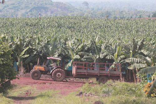 Plantations du Haut Penja seeks agricultural tractor supplier for its operations in Cameroon