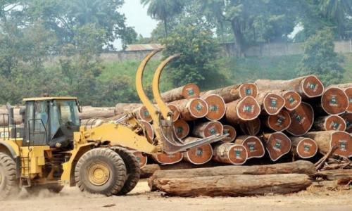 In 2017, EU's timber imports slumped due to lower exports from Cameroon, Gabon and Congo