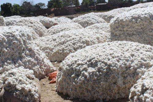 Cemac: Higher cotton output dropped export prices by 7.7% in Q4 2018