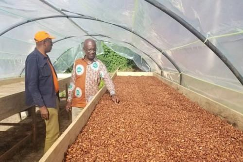 Cocoa: Farmgate prices rise to XAF1,250