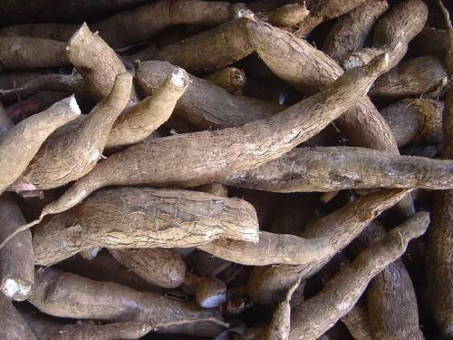 Cameroon develops 19-35 tons yields capacity per hectare