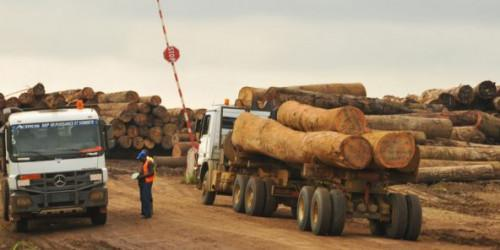 Douala port's congestion affects the central African region's wood export (ITTO)