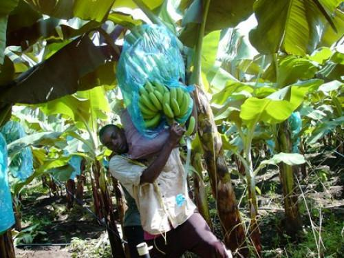 Cameroon : Agriculture contributed 76.38% to GDP in 2017