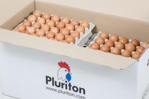 Cameroon temporarily bans the importation of day-old chicks and hatching eggs to guard national territory against avian influenza