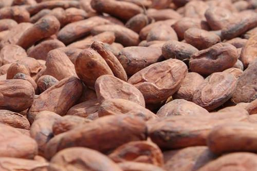 Cameroon: Short rainy season's onset induces a slight drop in Cocoa prices