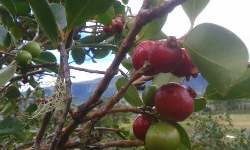 Cameroon: Fermencam wants to plant 4,942 acres of fruit trees to launch natural juice production