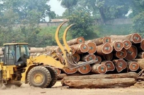 Cameroon exported 728.8 mln m3 of raw timber in 2019