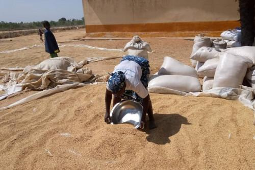 Cameroon estimates 2020 rice deficit at 436,239 tons