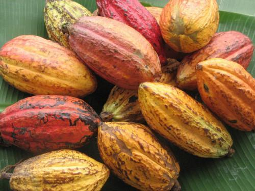 "Cameroonian cocoa to be labeled ""pure origin"", in collaboration with French chocolate makers"