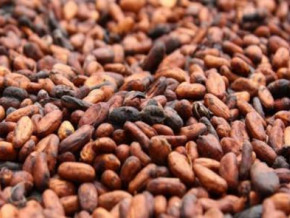 cameroon-s-cocoa-processing-capacity-to-be-boosted-with-the-commissioning-of-atlantic-cocoa-s-plants-in-kribi