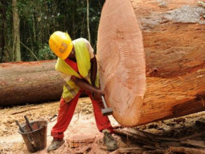 cameroon-and-gabon-are-the-netherlands-major-wood-suppliers-for-civil-engineering-works