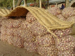 cameroon-a-100-kg-bag-of-onion-now-sold-at-xaf120-000-in-yaounde-more-than-six-times-its-former-price