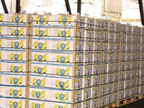 cameroon-exported-14-205-tons-of-banana-in-june-2019