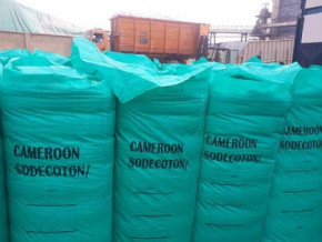 china-is-the-main-destination-for-cameroon-s-cotton-sodecoton