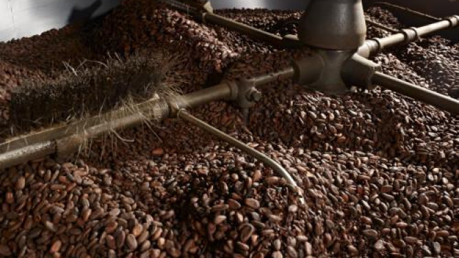 cameroon-sic-cacaos-neo-industry-and-atlantic-cocoa-could-lose-cfa11-billion-on-anglophone-crisis