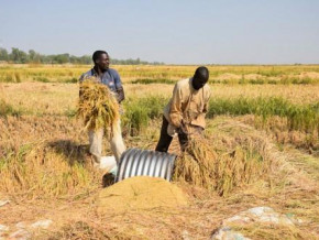 flood-control-6-000-ha-of-rice-paddies-renovated-in-the-framework-of-project-pulci