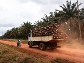cameroon-beac-expects-palm-oil-production-to-drop-in-q4-2021