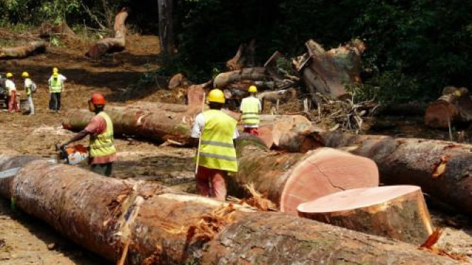 cameroonian-wood-exporters-could-be-declaring-lower-quality-products-to-lower-customs-charges