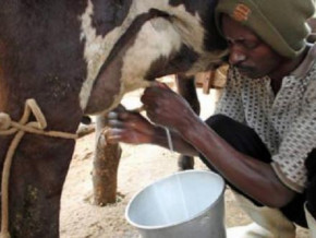 cameroon-seeks-equipment-suppliers-for-3-milk-processing-units-in-the-north-west