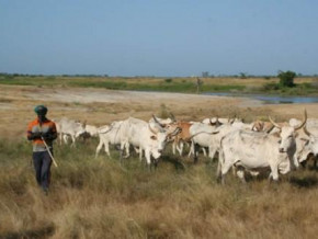 local-herders-paid-ransoms-of-over-xaf2bln-between-2015-and-2018-in-adamaoua-region