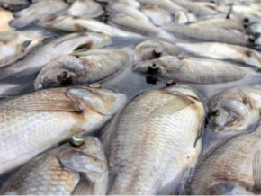 over-6-400-tons-of-illegaly-harvested-fishes-seized-at-lagdo-dam