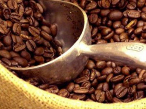cameroon-the-coffee-sector-is-still-declining