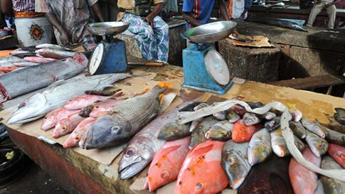 nigeria-absorbs-70-80-of-benue-river-s-fish-products