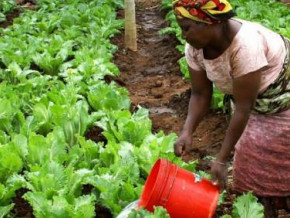 cameroon-fine-tunes-a-draft-law-on-organic-agriculture