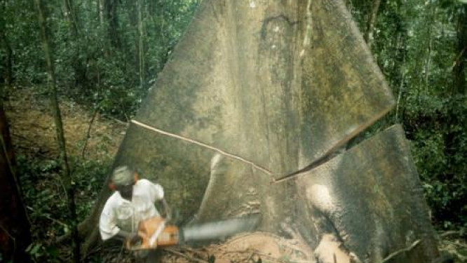 logging-cameroon-to-issue-new-forest-concession-licenses-in-nkam-and-donga-mantug